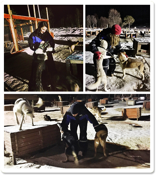 Dog Sledding Photos