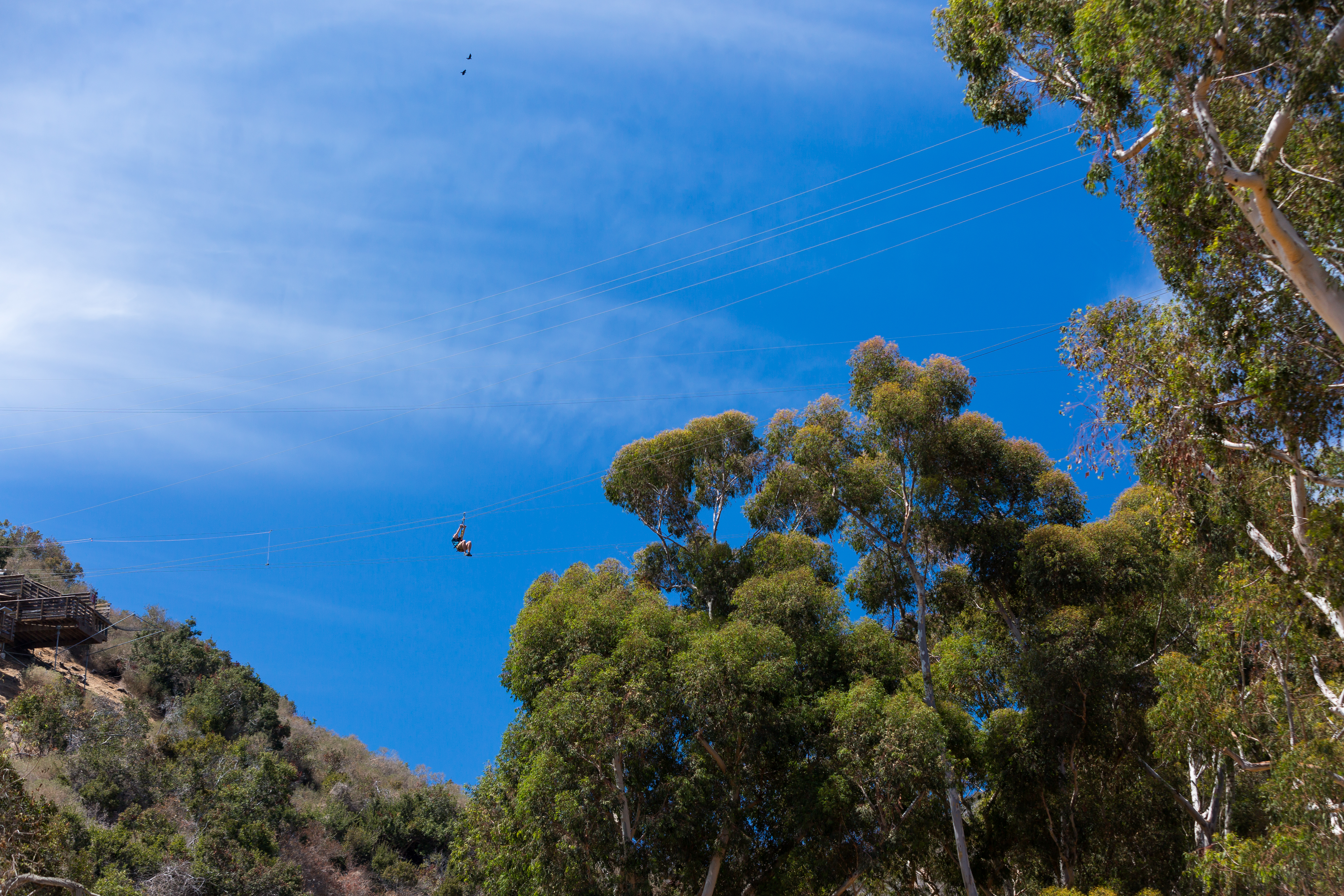 Catalina Island Zip Line Eco Tour | Find Things to Do