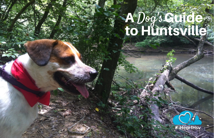 A Dog's Guide to Huntsville, Alabama via iHeartHsv.com