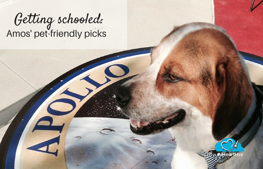 Dog friendly places and activities in Huntsville, Alabama via iHeartHsv.com