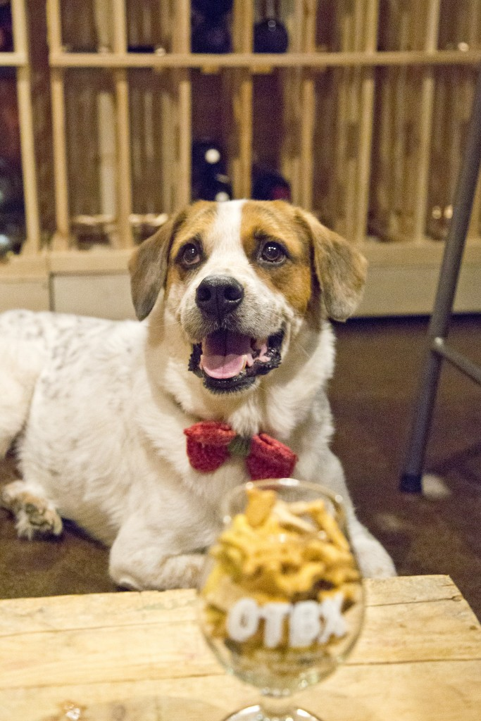 6 Dog-Friendly Breweries in Huntsville