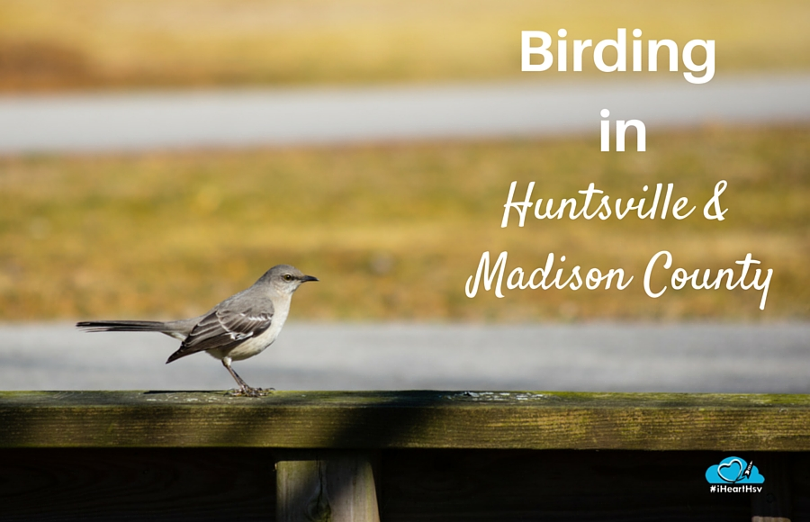 Birding in Huntsville & Madison County