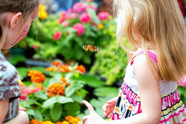 Butterflies in Bloom at Dow Gardens in Midland, MI