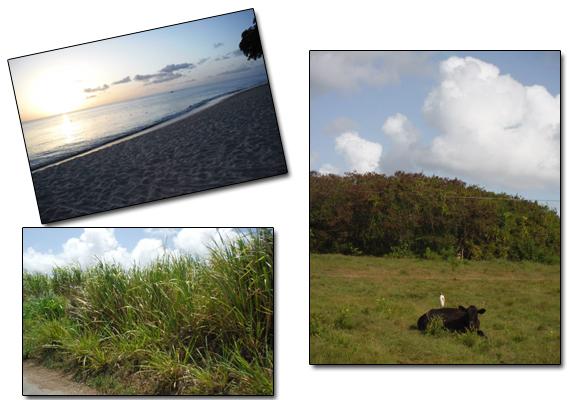 Barbados Intro