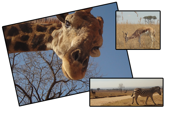 South Africa - Animals 1