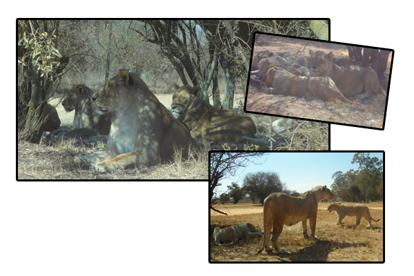 South Africa - Animals 3