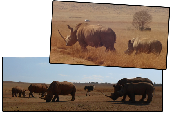 South Africa - Animals 4