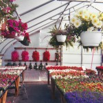 This 2004 photo shows the inside of a greenhouse at Homeland Gardens, Middlebury.