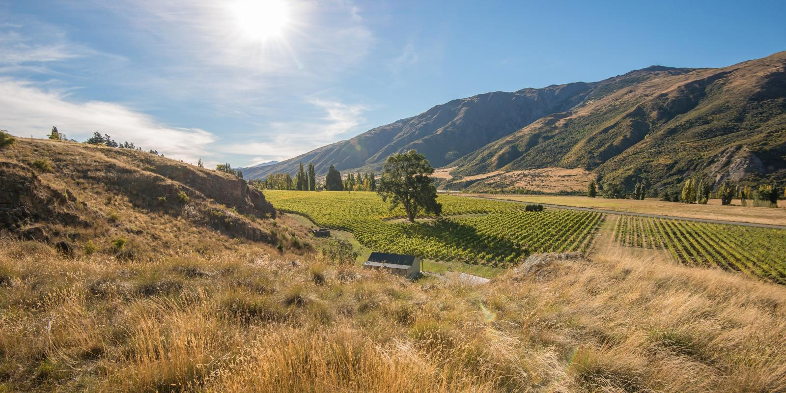 Kinross Winery Queenstown New Zealand