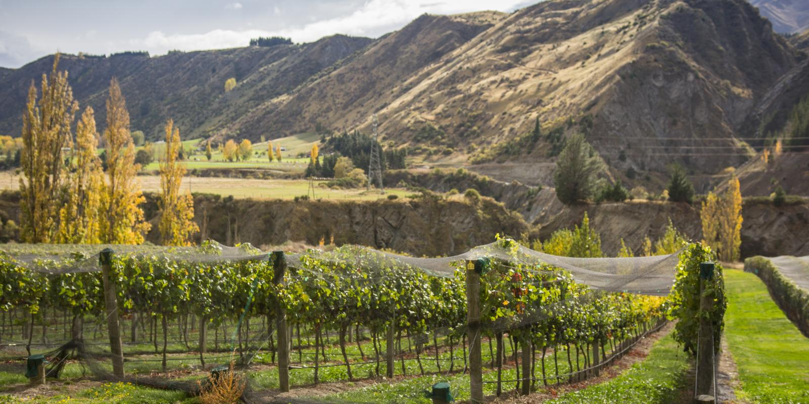 The history of wine in Queenstown