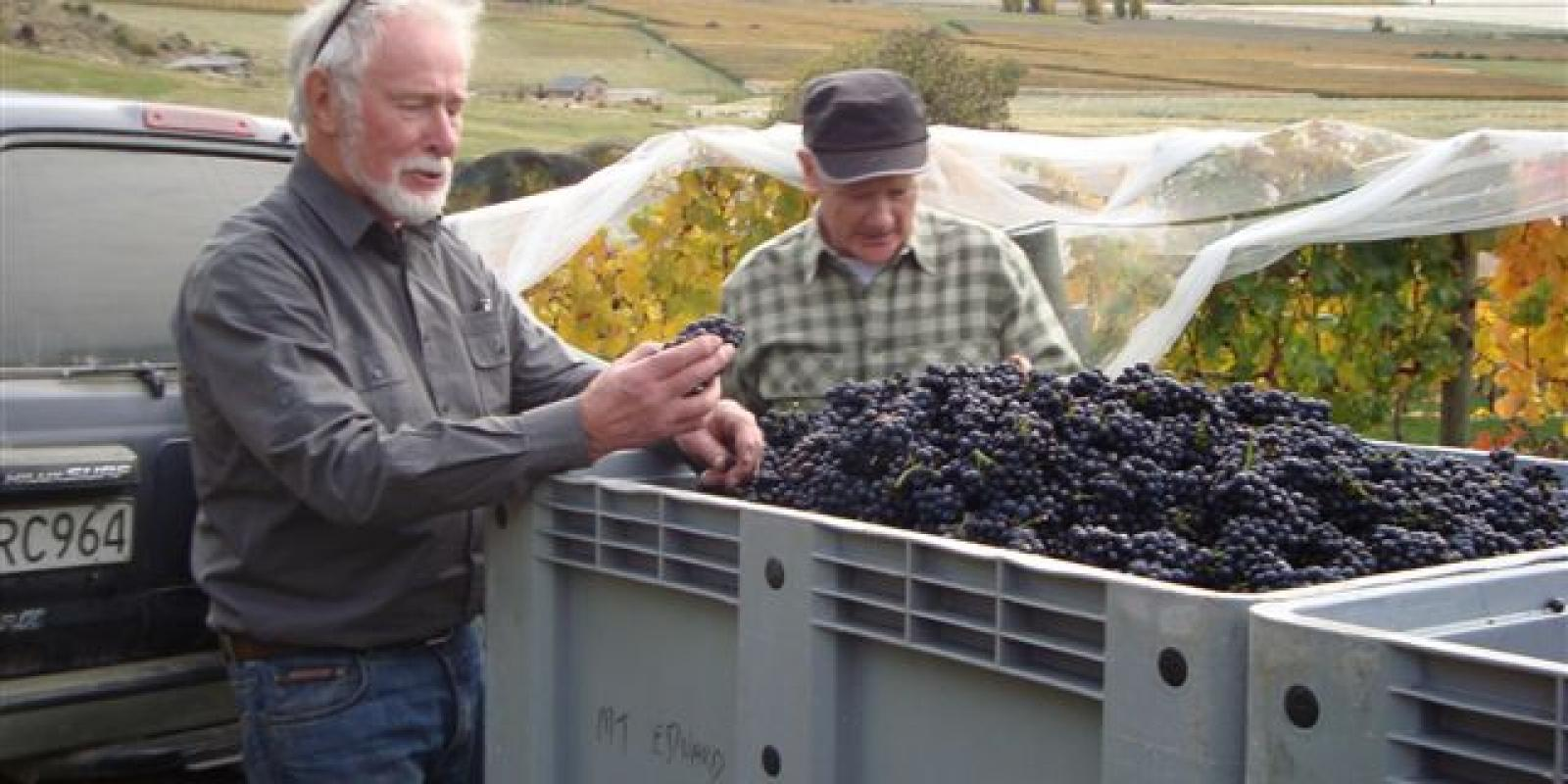 Queenstown, Central Otago wine harvest