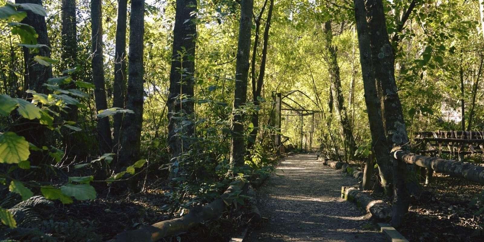 Aviary and native trees at the Kiwi Birdlife Park