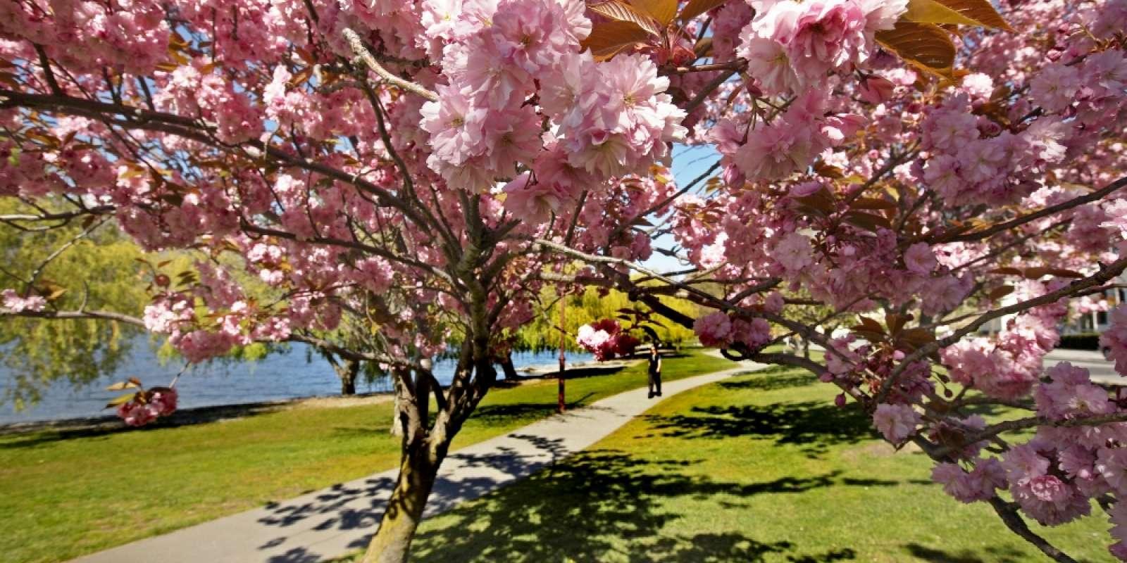 Lake Esplanade in spring