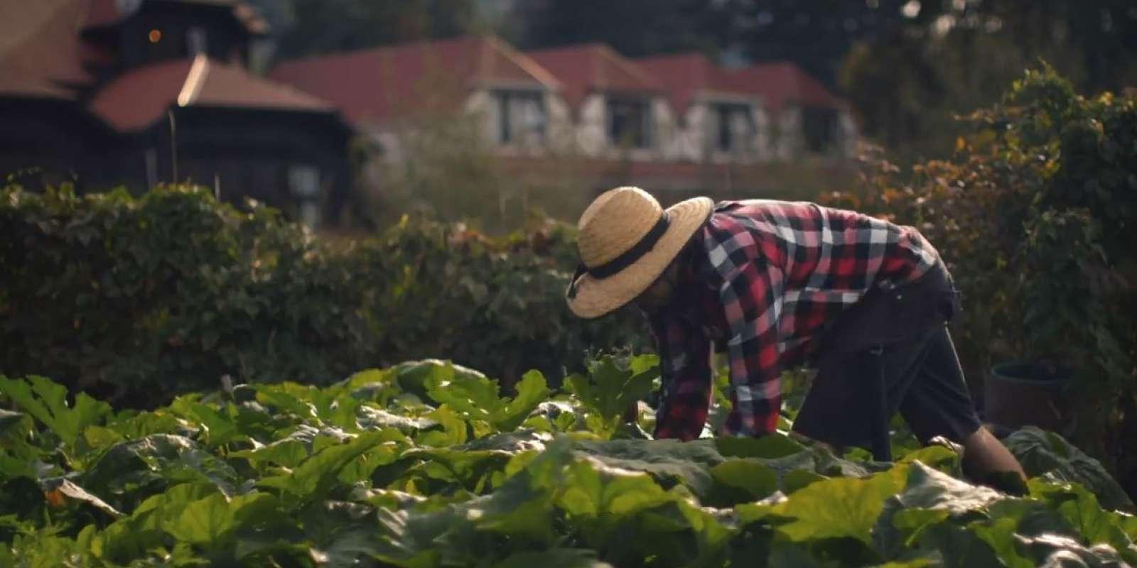 Sherwood vegetable garden
