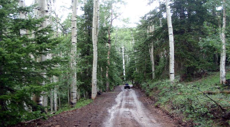 Bull Rush ATV Trail
