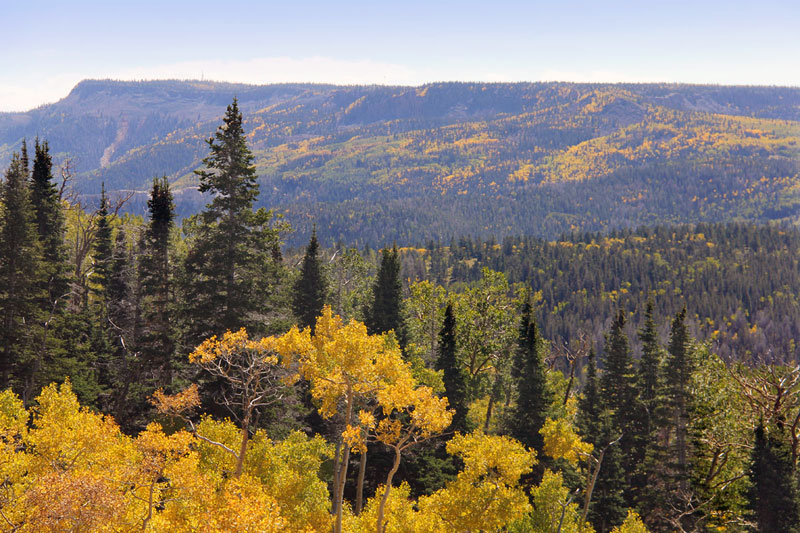 Fall Colors - Boulder Mountain