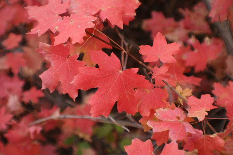Fall Color - Utah