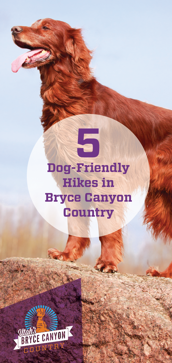 Check out these five dog-friendly hikes in Bryce Canyon Country that you and your furry best friend will enjoy together.