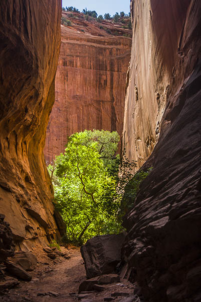 A slot canyon off Burr Trail. Photo courtesy of David Heaton.