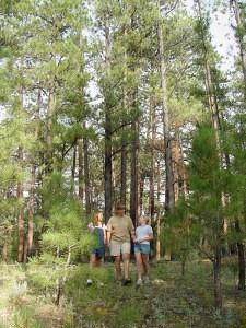 Dixie National Forest Utah
