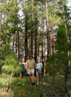An enjoyable walk through the Dixie National Forest.