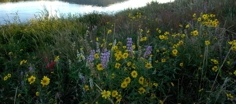 Flowers in the mountain meadows begin to bloom