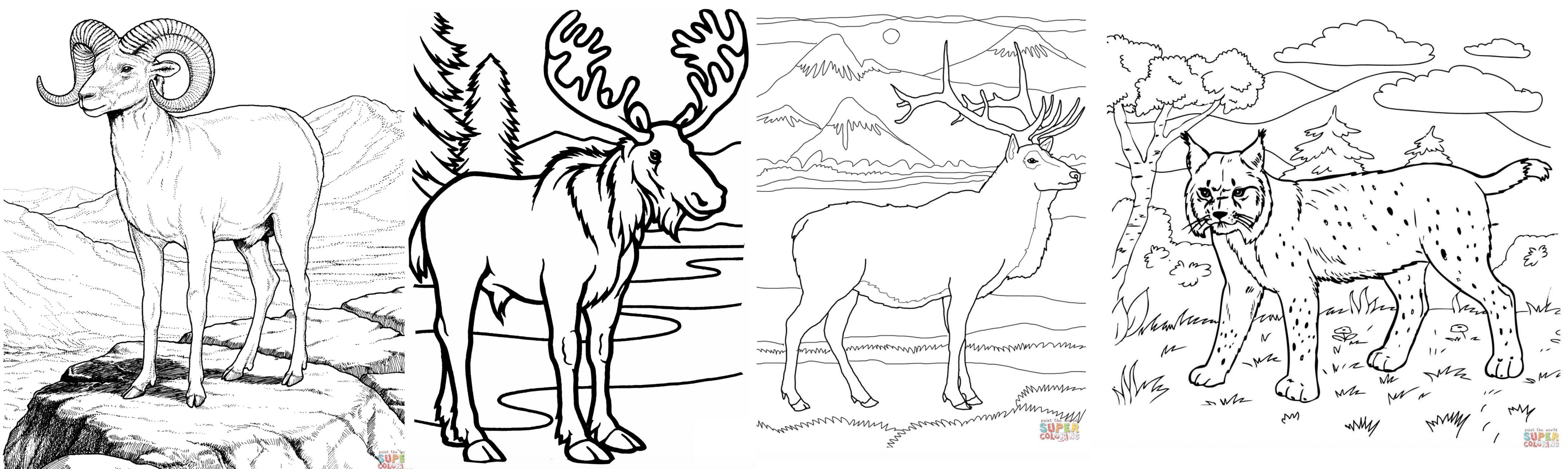 Estes Park Wildlife Coloring Pages