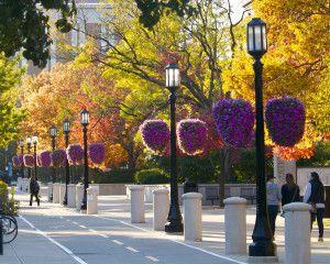 Campus Baskets and Walk