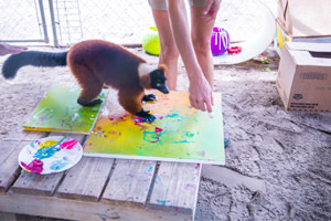 A Wild Bunch of Artists-in-Residence at the Alabama Gulf Coast Zoo