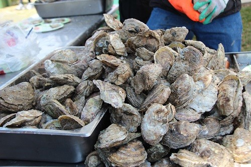 Annual Annapolis Oyster Festival