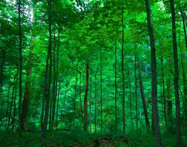 Bebb Forest