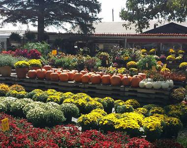 Browns Family Farm Market Garden