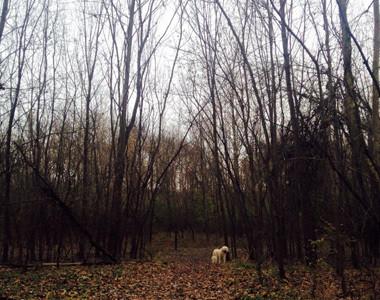 Woodsdale Regional Park