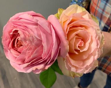 KC Flower Farm roses