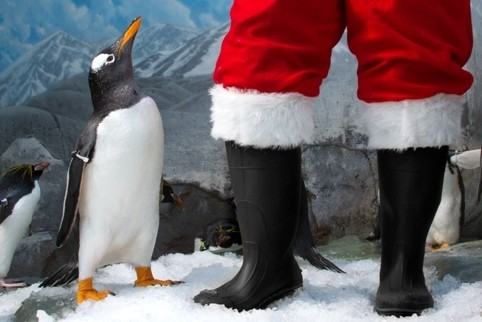 Tennessee Aquarium's Holidays Under the Peaks & IMAX 3D