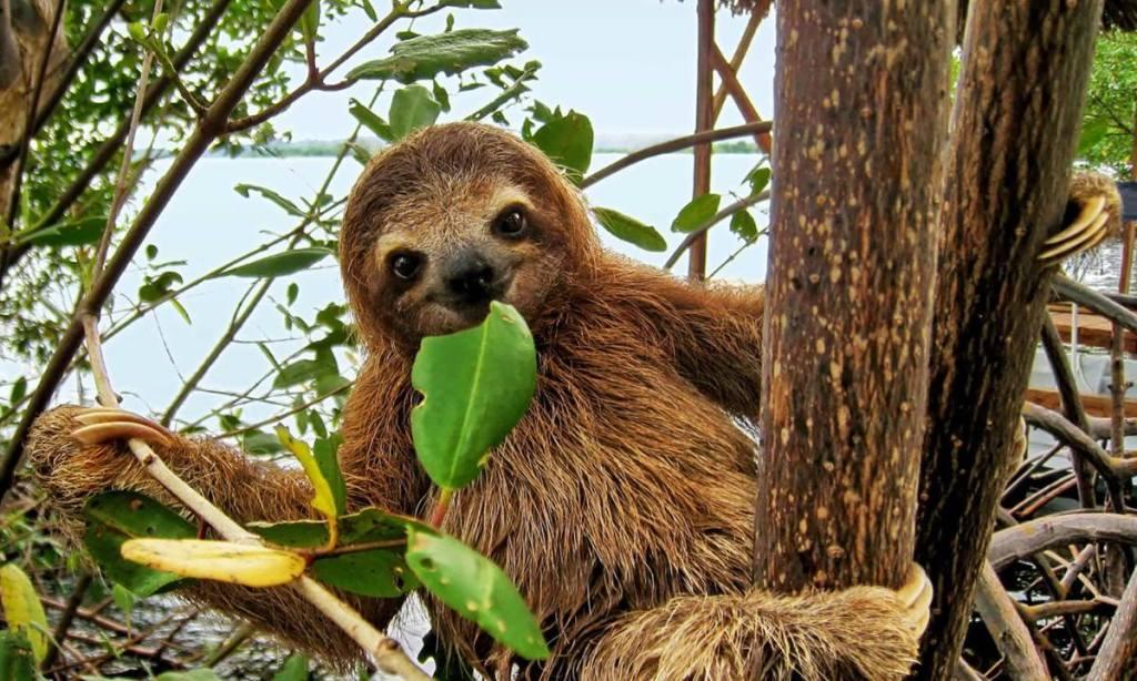 Meet a Sloth!  Natural History Exhibition at Mid-Hudson Civic Center!