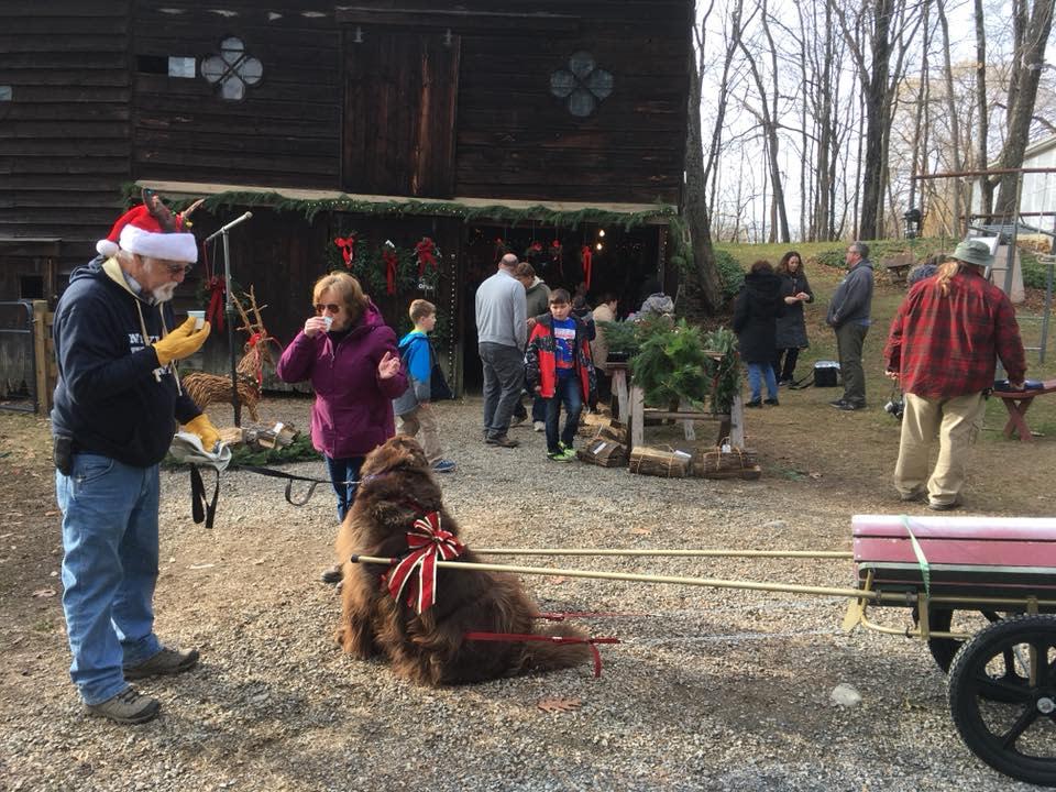 Saltsman Tree Farm Welcomes Bear Mountain Newfoundland Dog Club for Christmas Tree Pull Event!