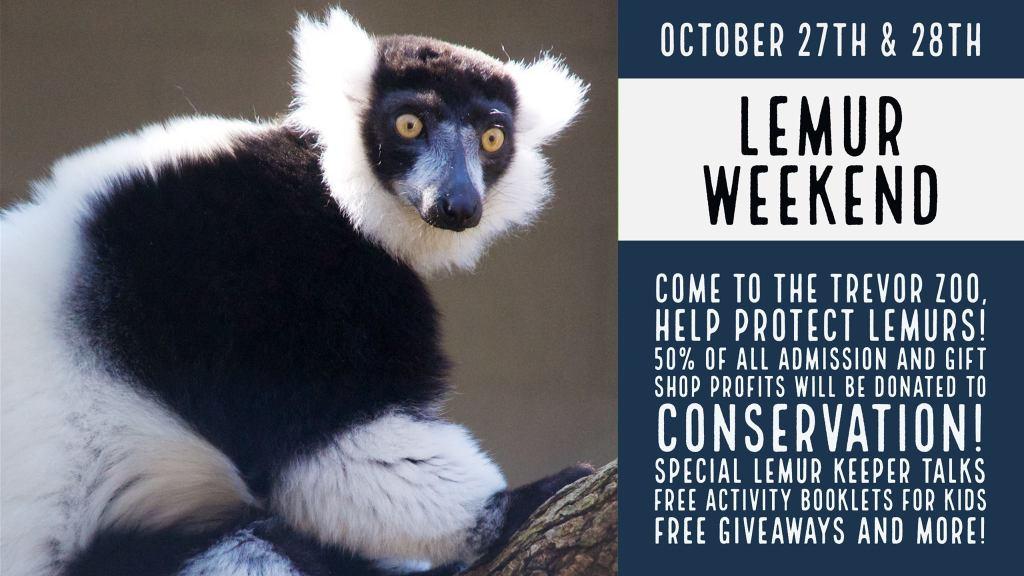 Lemur Weekend at the Trevor Zoo Millbrook
