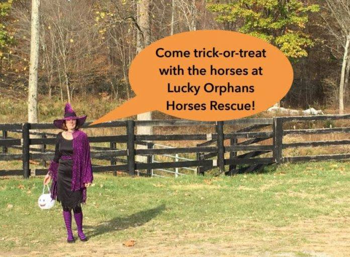 Trick or Treat with the Horses at Lucky Orphans Horse Rescue