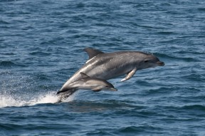 Orange Beach Private Dolphin Family Safaris