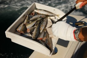Salty Dog Fishing Charter Guides