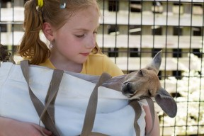 Kangaroo Encounter: Alabama Gulf Coast Zoo