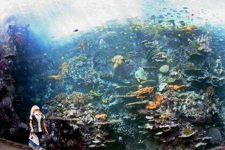 Tropcial Diver.jpg