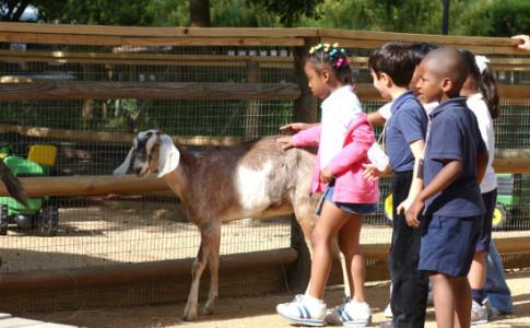 Atlanta-Zoo-Petting-Zoo-550x367