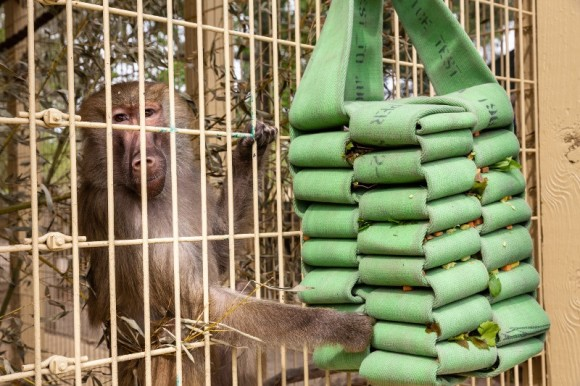 Animal Enrichment Program: Alabama Gulf Coast Zoo Fall 2019