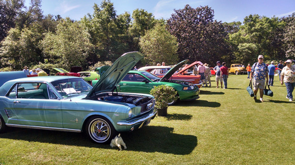 26th Annual Camellia Classic Open Car Show