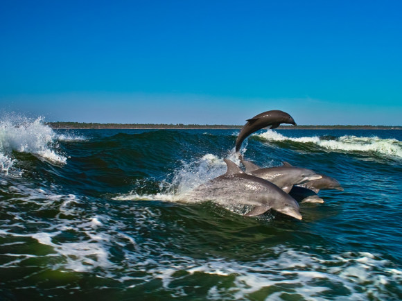 $15 Dolphin Cruise