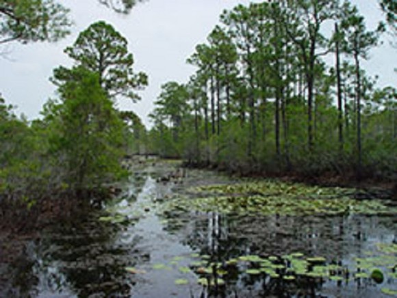 Gulf Shores Wetlands Nature Park