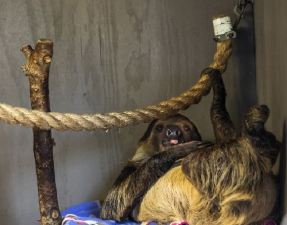 Sloth Encounter: Alabama Gulf Coast Zoo