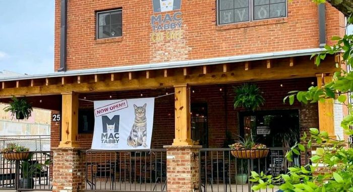 Mac Tabby Cat Café